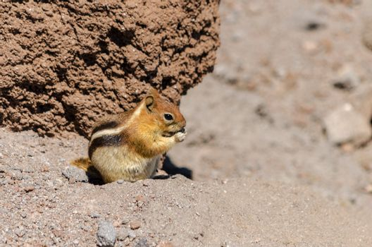 Chipmunk eating surrounded by barren rocks