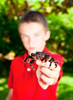Kid showing crab