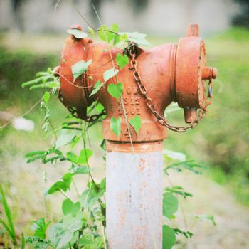 Old fire hydrant and ivy plant with retro filter effect