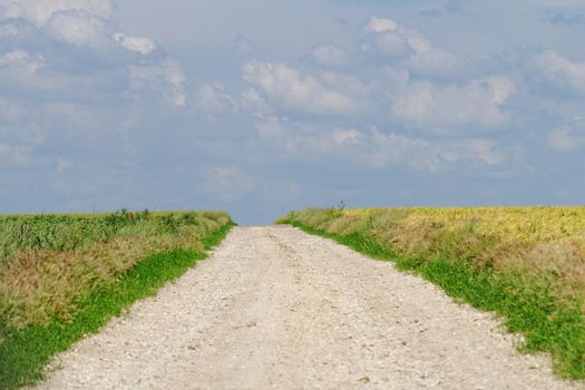 white road between two agricultural fields