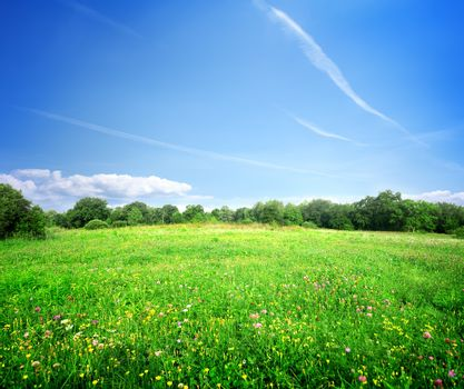 Bright meadow flowers