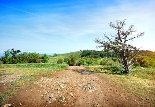 Sandy road in a field