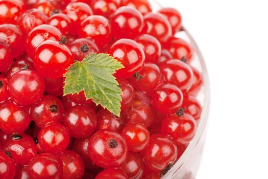 Red currants with green leaf over white background
