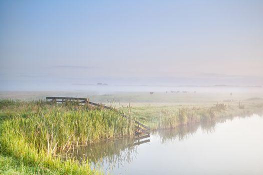 misty morning in farmland