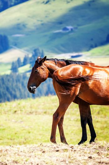 horses in the landscape
