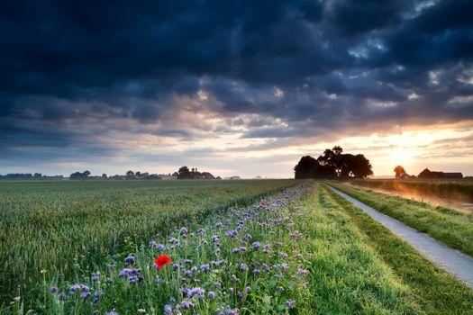 summer sunrise over Dutch farmland