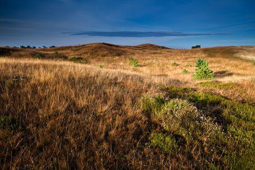 heather flowers on hills