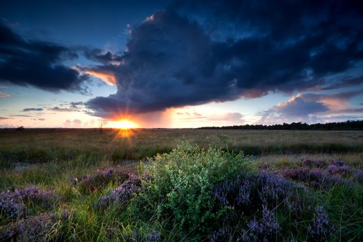 dramatic sunbeams over swamp with heather