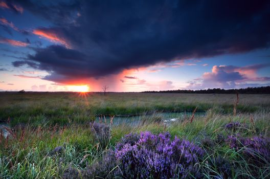 sunset sunbeams over swamp with heather