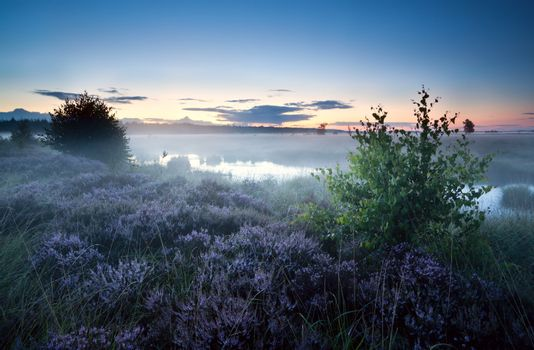 misty morning over swamp with heather
