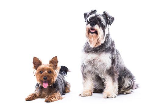 Loyal family dogs