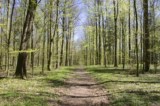 Path in forest in spring
