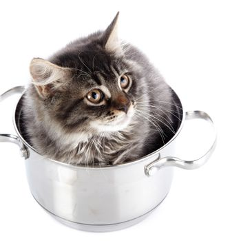 Fluffy cat in a pan.