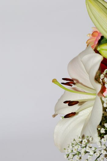 bouquet of fresh colorful flowers portrait side view right on white background
