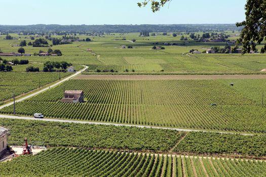 Distant vineyard