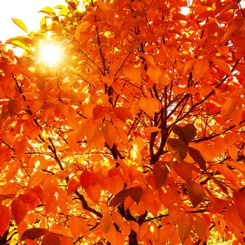 Natural autumn background