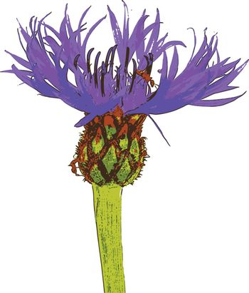 photorealistic, vector, traced illustration of a field flower