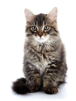 Striped fluffy cat