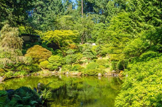 Lush green Japanese Garden and pond in Portland, Oregon