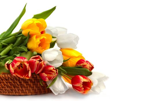 Colorful tulip bouquet in basket isolated on white