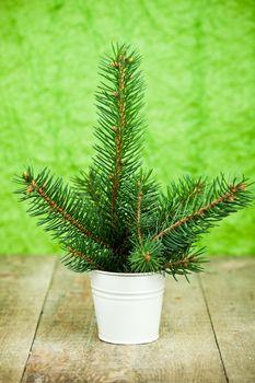 bucket with christmas fir tree