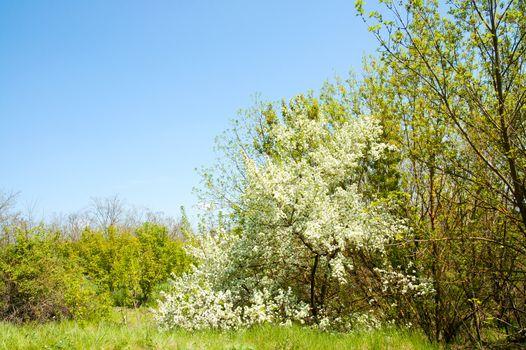good glade in spring