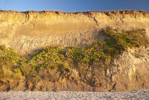 Cliff in Ahrenshoop in Germany