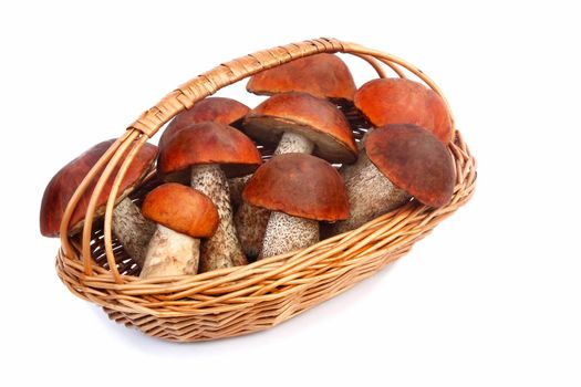 Beautiful mushrooms, aspen mushrooms with red hats in a wicker basket. Presented on a white background.