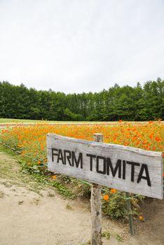 Flower in Tomita Farm Japan