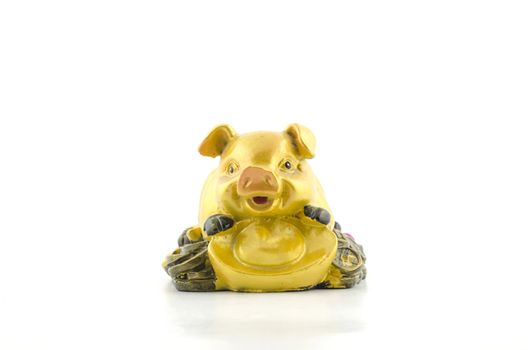 gold pig on coin isolated with white background