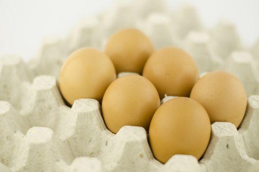 eggs in Panel eggs.