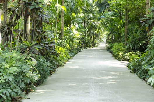 nature Passage with many trees