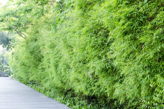 aisa Bamboo groves it green tone color