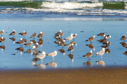 Seagulls on a beach by the Pacific Ocean in Lincoln City, Oregon