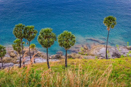Palm trees on the beach on the island of Phuket