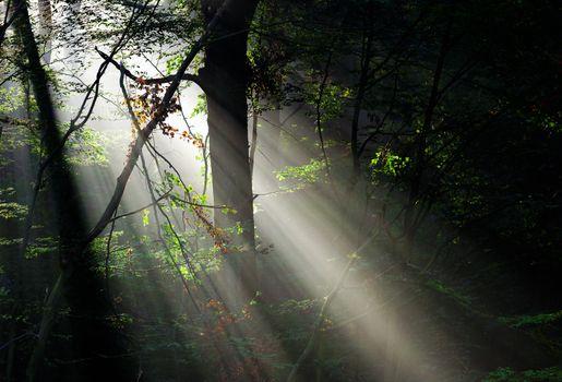 Sunbeams in deep forest