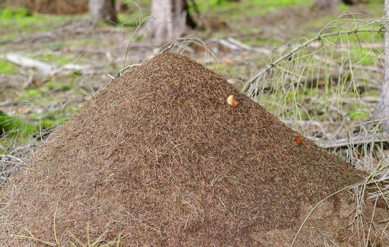 a great anthill in the forest