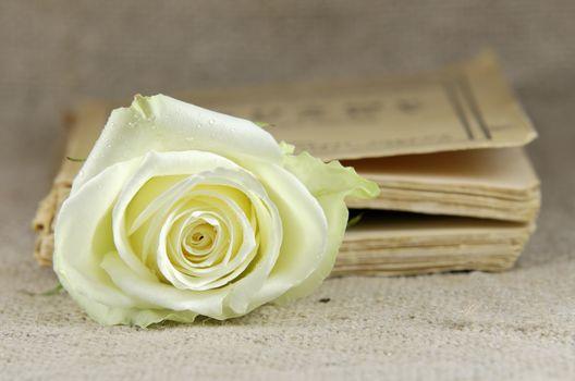 a rose in closed book