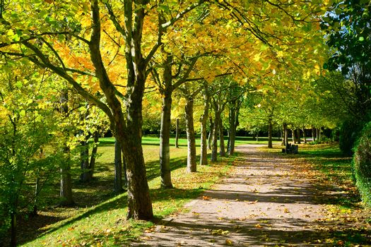 Pedestrian walkway for exercise lined up with beautiful fall tre