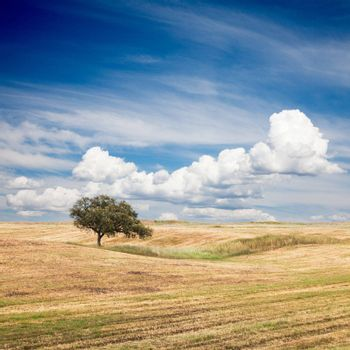 Lonely tree on farm field with beautiful sky.