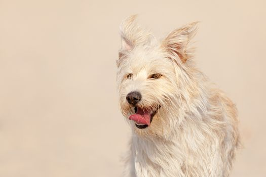 Cute white dog at the beach on a sunny day.