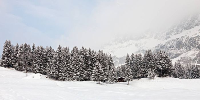 Panoramic photo of a forest in the mountains covered with snow on a snowstorm. Swiss Alps.