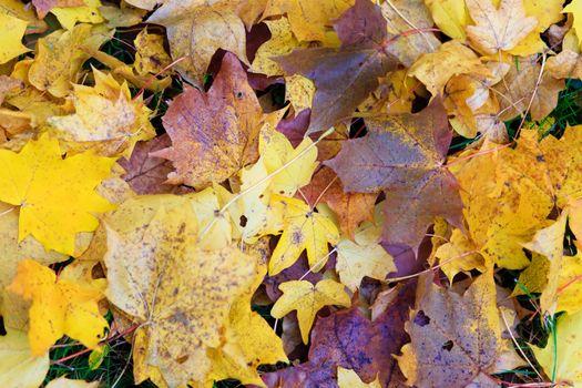 nice leaf in natur