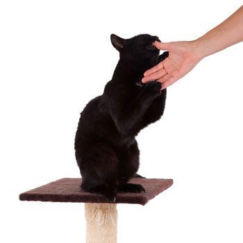 Black cat with a scratch pole
