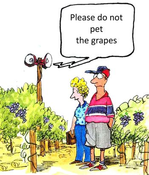 Vineyard Instructions