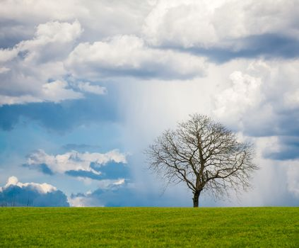 Lonely leafless tree on grass field with cloudy sky on a rainy. Square frame.
