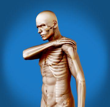 Shoulder pain on transparent human figure