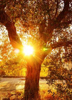 Sun ray through autumnal foliage