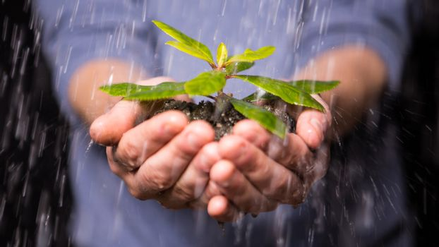 Hands holding seedling in the rain