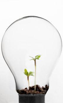 Seedling inside light bulb